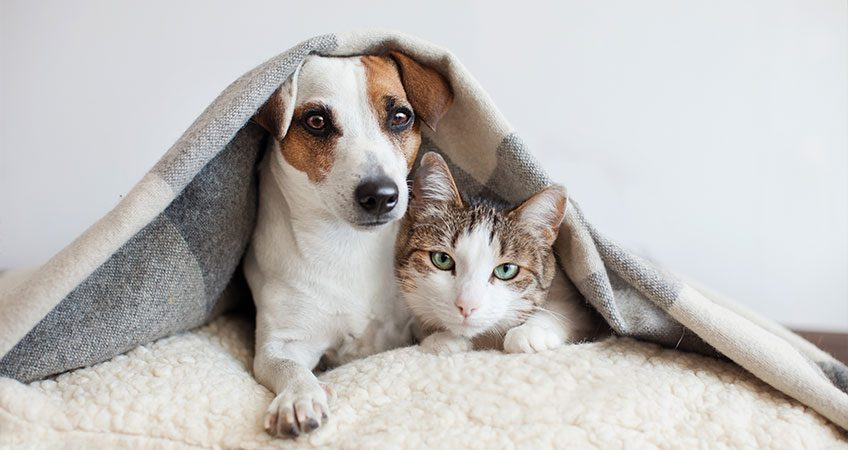 HOW CAN CBD HELP A PET'S HEALTH?